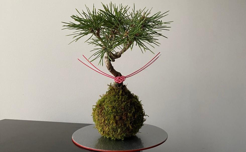 Kuromatsu's moss ball art-To the time to heal your home time-