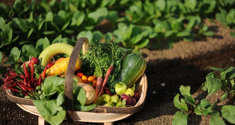 Riviera farm of pesticide-free vegetables